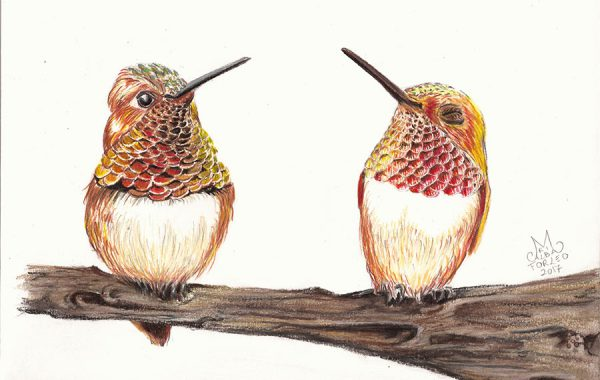 Colibrì rossicci